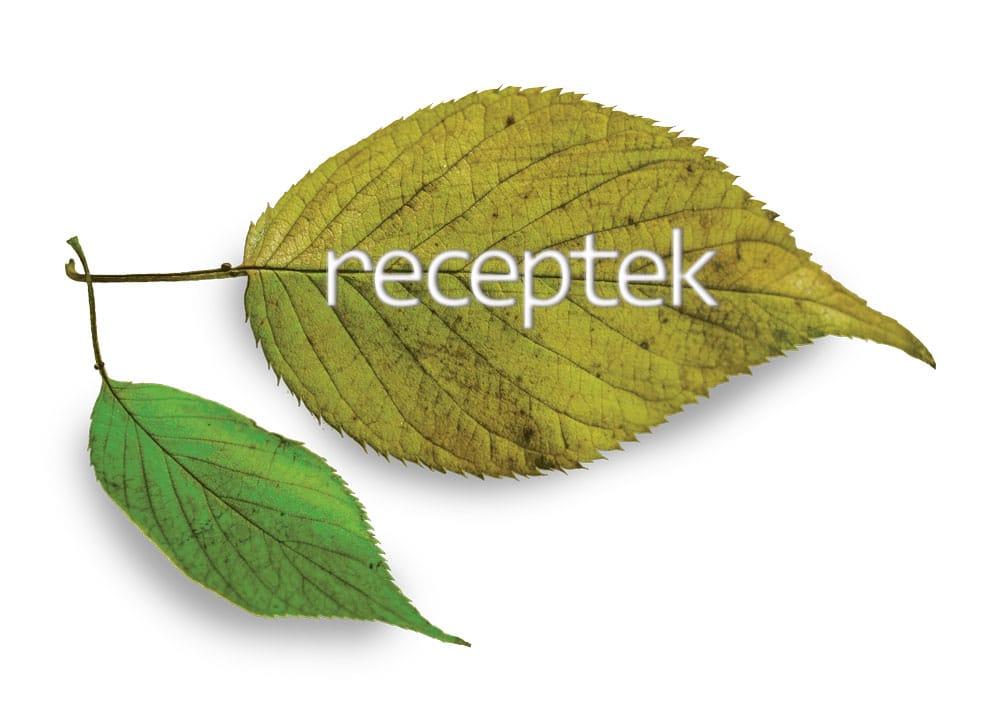 Receptek Leaf Brochure Logo